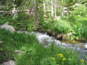 wpid-another-creekside-photo1.jpg