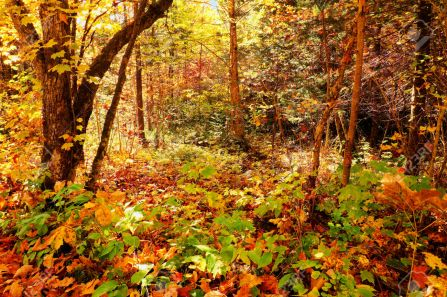 Beautiful enchanted forest during fall or autumn, great fairy tale background, hdr