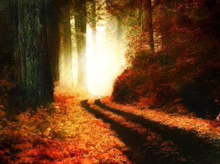 the-enchanted-autumn-forest-lee-anne-rafferty-evans