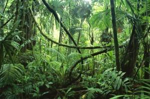 jungle-300x199-e1365097593420