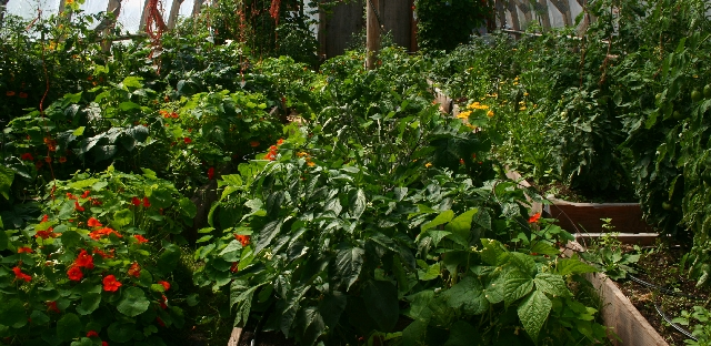 'Our Eco Village' greenhouse, image by Monica Holy