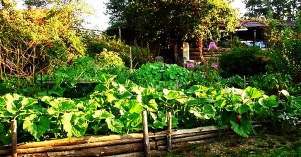 how-to-start-a-permaculture-garden