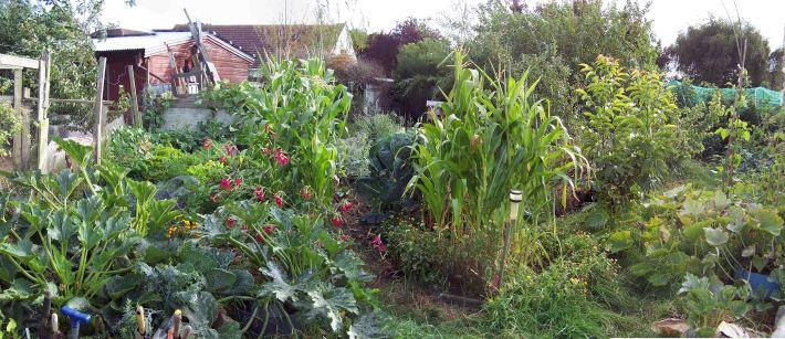 permaculture-garden2